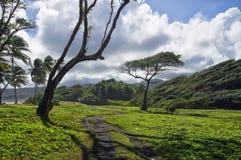 Uma estrada entre prados verdes Ilha de Domínica Imagens de Stock Royalty Free
