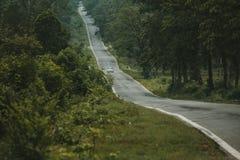 Uma estrada fina em uma floresta foto de stock royalty free