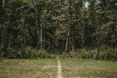 Uma estrada fina que vai a uma floresta grossa verde imagem de stock royalty free