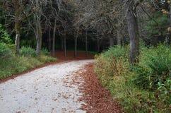 Uma estrada folha-espalhada no parque do outono de Kislovodsk, Rússia imagens de stock