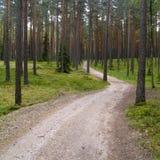 Uma estrada na floresta Fotografia de Stock Royalty Free