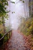 Uma estrada na floresta nevoenta Foto de Stock