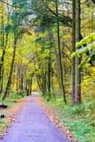 Uma estrada na madeira Imagem de Stock Royalty Free