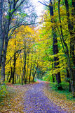 Uma estrada na madeira Fotos de Stock