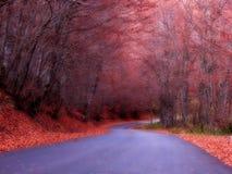 Uma estrada nas madeiras imagem de stock