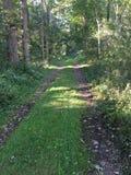 Uma estrada nas madeiras Imagens de Stock Royalty Free