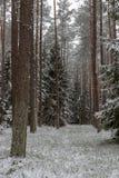 Uma estrada nevado em um canal conífero da floresta na floresta e as árvores cobriram com a neve fresca imagens de stock royalty free