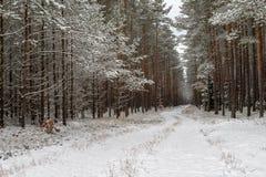 Uma estrada nevado em um canal conífero da floresta na floresta e as árvores cobriram com a neve fresca imagem de stock