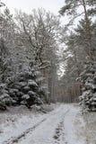 Uma estrada nevado em um canal conífero da floresta na floresta e as árvores cobriram com a neve fresca imagens de stock