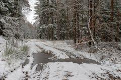 Uma estrada nevado em um canal conífero da floresta na floresta e as árvores cobriram com a neve fresca fotografia de stock royalty free