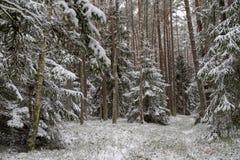 Uma estrada nevado em um canal conífero da floresta na floresta e as árvores cobriram com a neve fresca fotos de stock royalty free