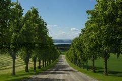 Uma estrada no campo do yhe com as árvores simétricas em cada lado fotografia de stock royalty free
