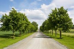 Uma estrada no campo do yhe com as árvores simétricas em cada lado imagens de stock