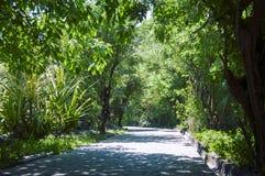 Uma estrada pitoresca, correndo através do terreno montanhoso na selva de Vietname Com tonificação foto de stock royalty free