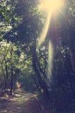 Uma estrada pitoresca, correndo através do terreno montanhoso na selva de Vietname Com tonificação e liting fotografia de stock