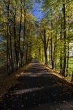 Uma estrada romântica na represa do ` s da lagoa alinhou com árvores, República Checa Fotos de Stock