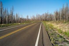 Uma estrada só através de uma floresta imagens de stock royalty free