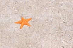 Uma estrela de mar Fotos de Stock Royalty Free