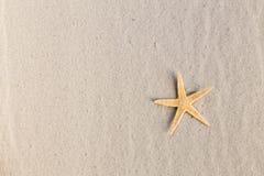 Uma estrela de mar imagens de stock