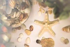 Uma estrela do mar Imagens de Stock