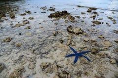 Uma estrela do mar Fotos de Stock Royalty Free