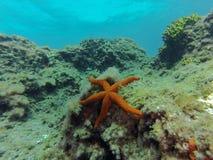 Uma estrela do mar Asteroidea empoleirado no fundo do mar nas costas de Gran Canaria imagem de stock