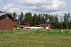 Uma exploração agrícola com vacas Foto de Stock Royalty Free