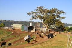 Uma exploração agrícola de leiteria pequena em Austrália Foto de Stock