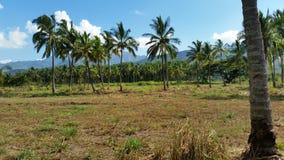 Uma exploração agrícola de palmeira na costa norte de Oahu Imagem de Stock