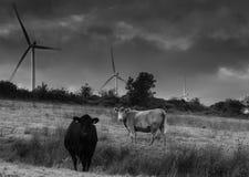 Uma exploração agrícola de vento em ireland Imagem de Stock