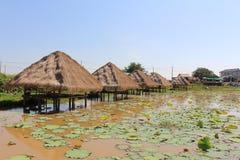 Uma exploração agrícola dos lótus em Camboja imagens de stock royalty free