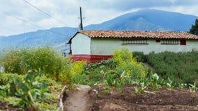 Uma exploração agrícola e uma casa da exploração agrícola Imagem de Stock