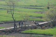Uma exploração agrícola em Kausani, Índia foto de stock