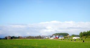 Uma exploração agrícola no país em Nova Zelândia Foto de Stock Royalty Free