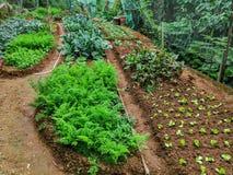 Uma exploração agrícola orgânica na ilha de Lantau, Hong Kong fotografia de stock