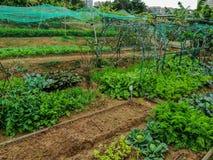 Uma exploração agrícola orgânica na ilha de Lantau, Hong Kong foto de stock royalty free