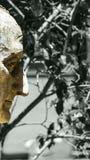 Uma face dourada Imagens de Stock