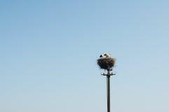 Uma família das cegonhas em um grande ninho. Imagens de Stock Royalty Free
