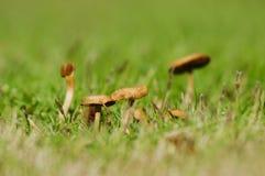 Uma família do cogumelo Foto de Stock Royalty Free