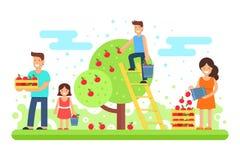 Uma família feliz recolhe colheitas da maçã ilustração do vetor