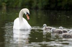 Uma família nova na chuva fotos de stock