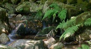 Uma fase do rio Imagem de Stock