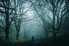 Uma figura solitária que está em uma avenida assustador, nevoenta do inverno das árvores em um trajeto através de uma floresta imagem de stock