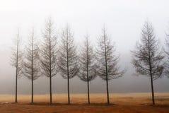 Uma fileira da árvore Imagens de Stock Royalty Free