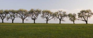 Uma fileira das árvores Imagens de Stock Royalty Free