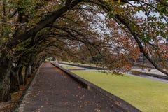 Uma fileira das árvores na estação do outono em Beppu, Japão imagens de stock royalty free