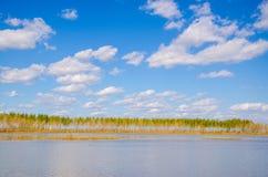 Uma fileira das árvores no lago Foto de Stock