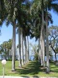 Uma fileira das palmeiras Fotografia de Stock