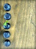 Uma fileira de cinco bagas maduras da uva-do-monte Imagem de Stock