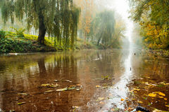 Uma fileira dos álamos na névoa densa no alvorecer fotografia de stock royalty free